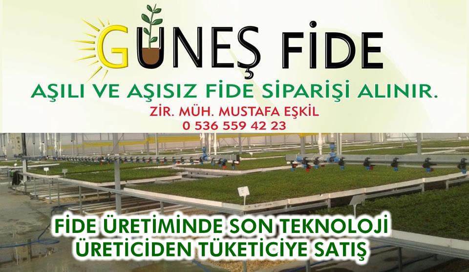 GÜNEŞ FİDE - İletişim İçin  0 536 559 42 23 Arayınız